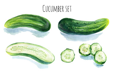 Watercolor cucumber