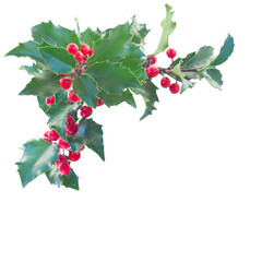 Holly branch boder