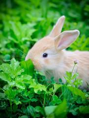 Little rabbit in green grass