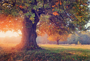 Autumn landscape with tree in sunlight