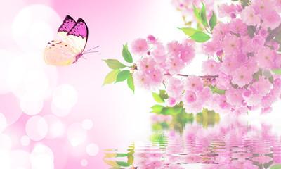 Flower sakura and butterfly