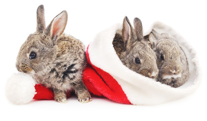 Three rabbits in a Christmas hat.