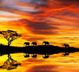 paisaje africano con elefantes