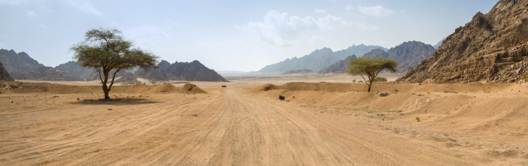 Foto op Plexiglas Droogte road and two trees in desert in Egypt