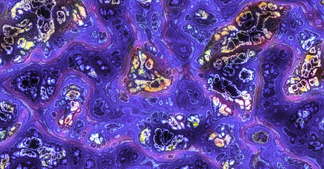 micrograph of blood vessel, artery and vein.
