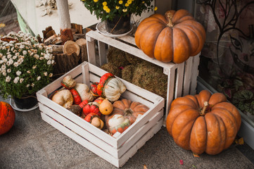 Pumpkins in a wooden box  rustic style