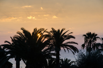 sun setting behind palm tree silhouettes and illuminating the sky and clouds above the sea coast