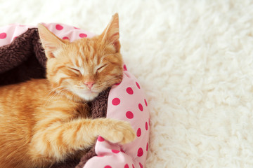 Wall Mural - Kitten sleeping in the bed