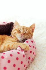Wall Mural - Kitten sleeping in the bed