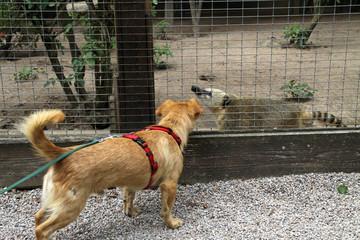 Hund und Nasenbär