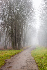 path in to cold morning fog on foliage on meadow among the trees of  autumn creepy park