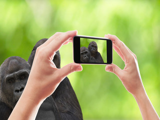 photographed two gorillas smartphone