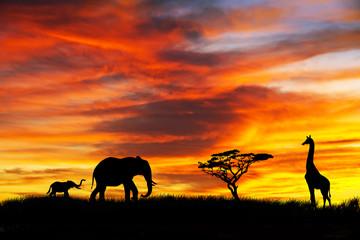 jirafas y elefantes en el paisaje africano