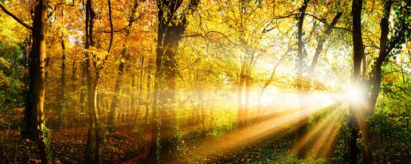 Autumn forest with sun rays