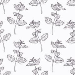 Hand drawn melissa branch outline seamless pattern