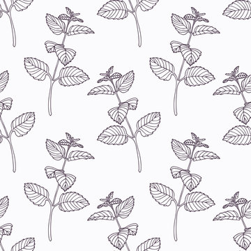 Hand drawn melissa branch outline seamless pattern