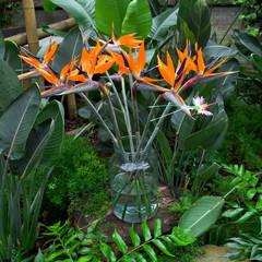 Birds of paradise flowers bouquet