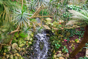 Exotic tropical garden landscape
