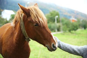 Girl feeding horse on meadow