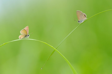 A Couple of Butterfly on The Grass