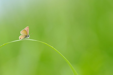 Lonely Butterfly on The Grass