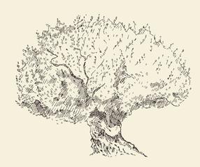 Vintage olive background Hand drawn illustration