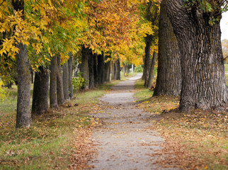footpath in the city park