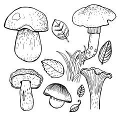 Set of different mushrooms.