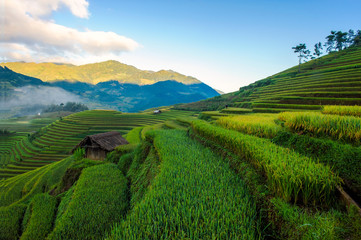 Self adhesive Wall Murals Rice fields Terraced rice fields of ethnic people in Mu Cang Chai district of Lao Cai province, Vietnam. It is world cultural heritage in Vietnam.