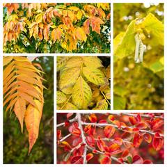 composition feuilles d'automne