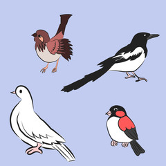 Vector cartoon bird. Sparrow, magpie, dove, bullfinch