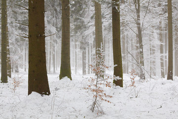 Wall Mural - Winterwald