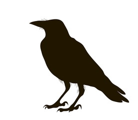 illustration silhouette of a crow sitting