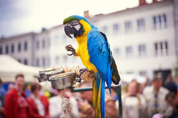 parrot bird animal papuga