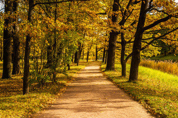 Road in autumn park in the morning