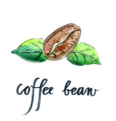 Coffee bean with green leaves