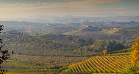 Wall Mural - Landscape of Langhe vineyard in autumn