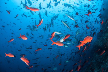 Colorful Fish in Pacific Ocean