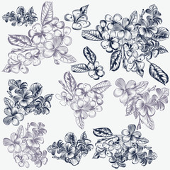 Set of vector hand drawn flowers for invitation designs patterns