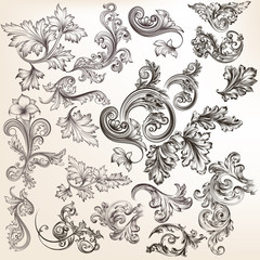 Vector set of floral elements for design. Calligraphic vector