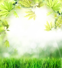 Spring or summer season abstract nature background with green grass and leaves