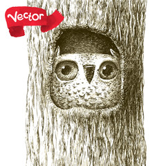 Cute Baby Owl Sitting in a Tree Hollow