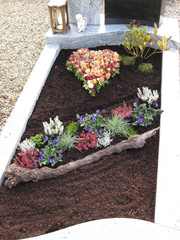 bilder und videos suchen gepflanzt. Black Bedroom Furniture Sets. Home Design Ideas