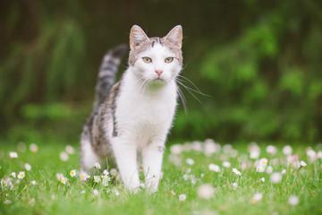 Katze steht auf Wiese und beobachtet