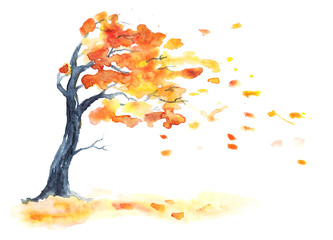 Watercolor autumn tree with yellow and orange leaves. Leaf fall with wind on white. Hand drawing illustration.