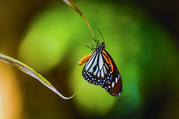 Butterfly on leaf of coconut tree with abstract blur nature back