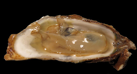 Raspberry point oyster