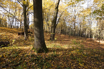 the trees .  autumn season