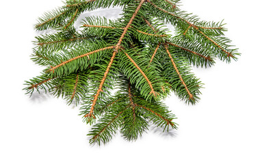 evergreen tree branch isolated on white