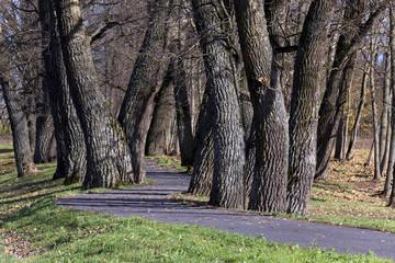 autumn trees  . Belarus